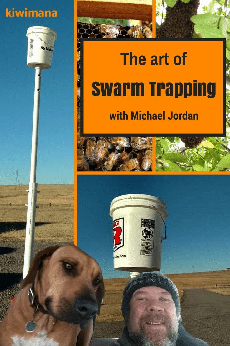 week we are talking to Michael Jordan from Wyoming We talking about Bee swarms and how to catch them Michael also explains how to build his Mobile Swarm Trap via kiwimana...