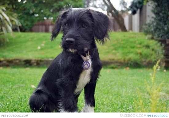 Schnocker Dog Pictures Videos Dog Photos Dog Pictures Dog Person