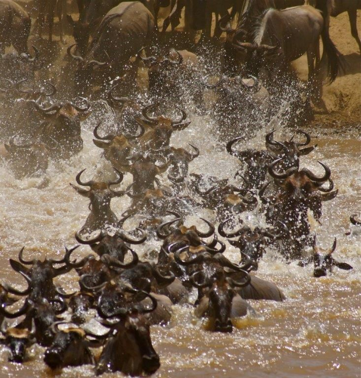 Wildebeest Migration  Shot by Africa Dream Safari Guests: Chris and Sandy S. San Diego, California Safari Dates: September 10, 2013 to September 22, 2013