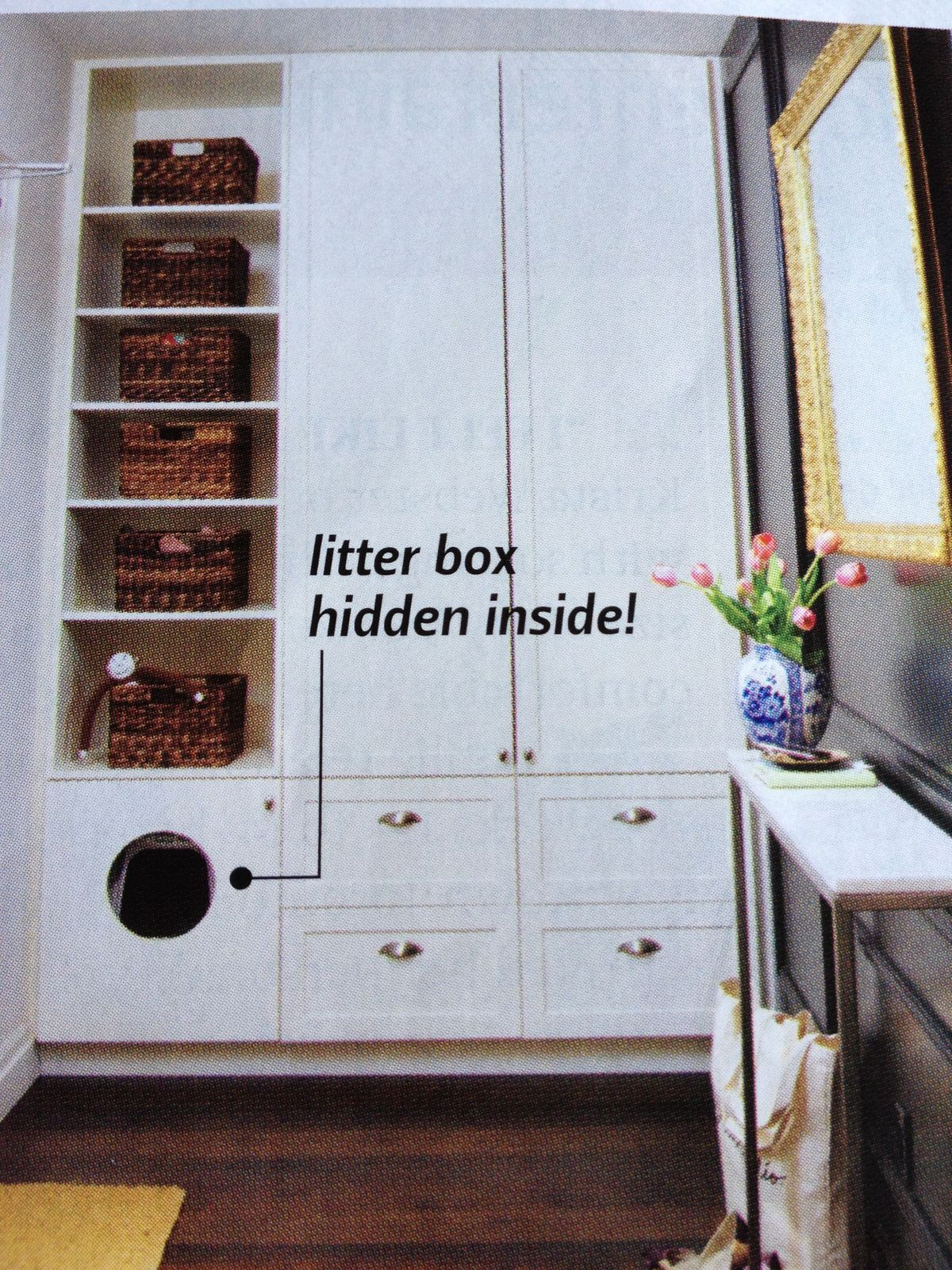 Hidden cat little. Laundry room.