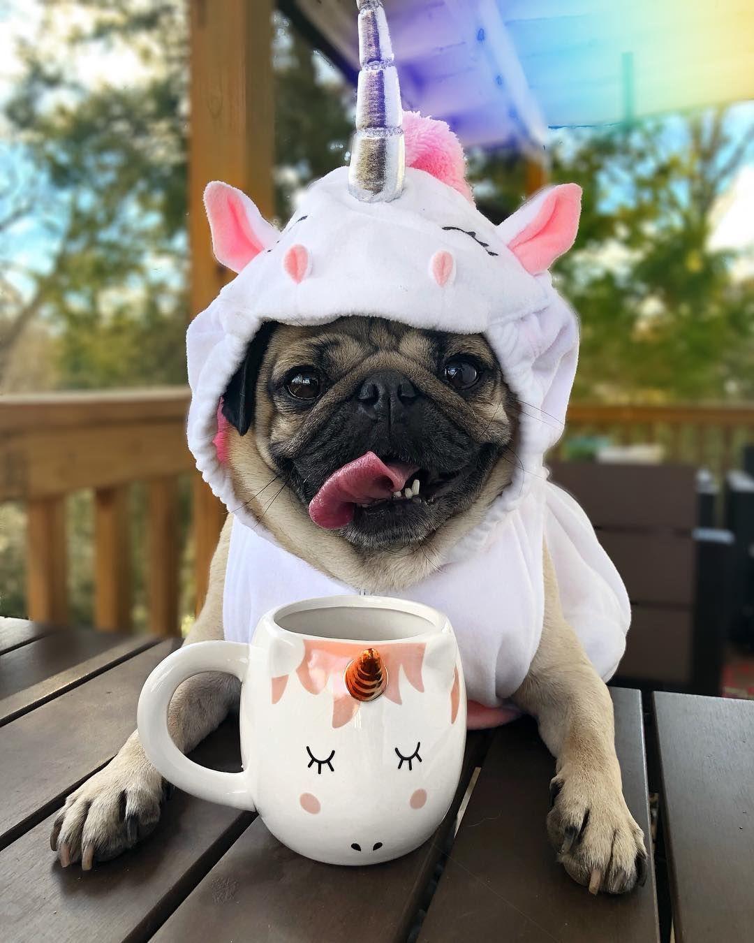 Doug The Pug On Instagram I Hope U Have A Magical Monday