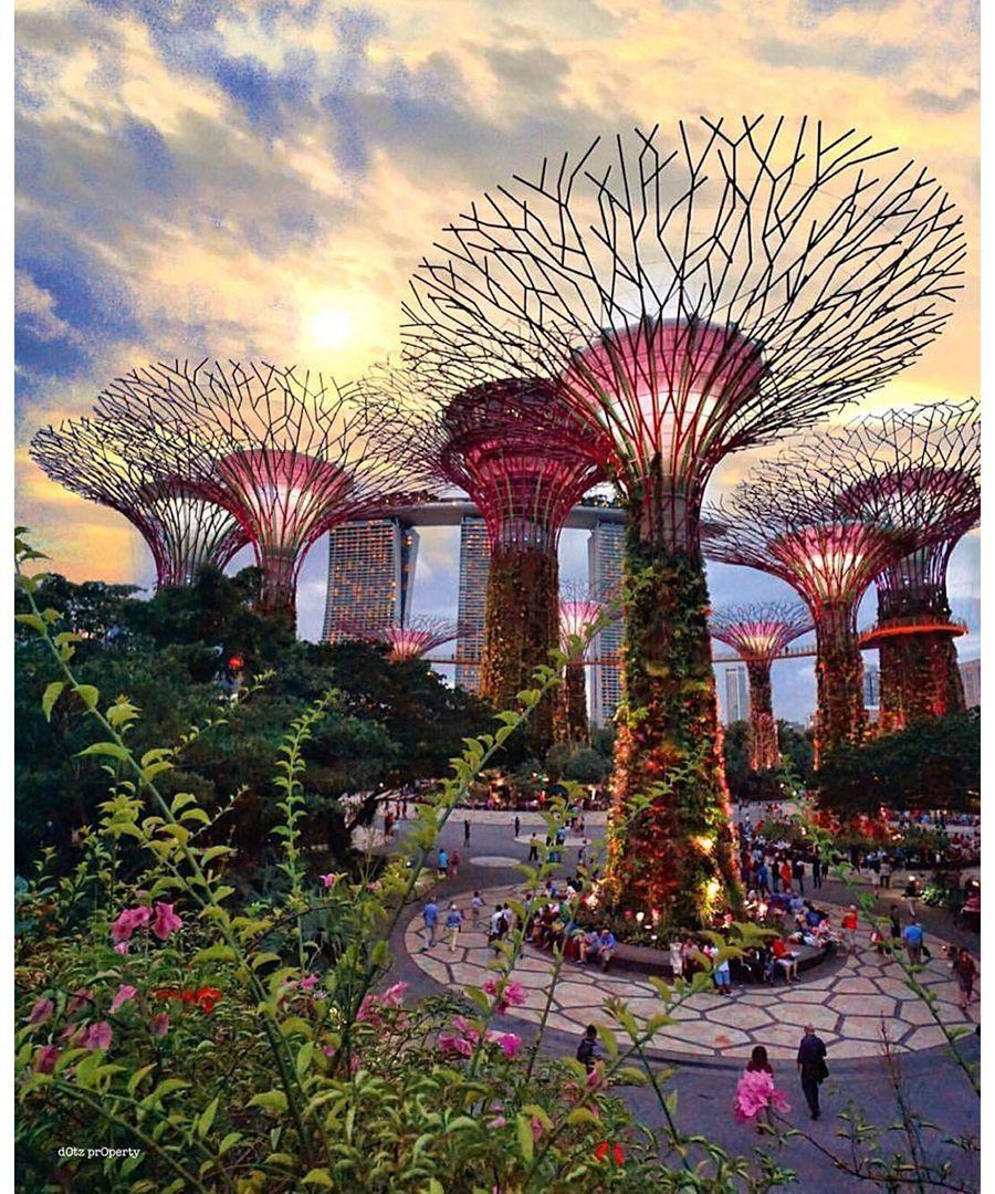 Best Instagram Photos Dujour Singapore Garden Gardens By The Bay Singapore Photos