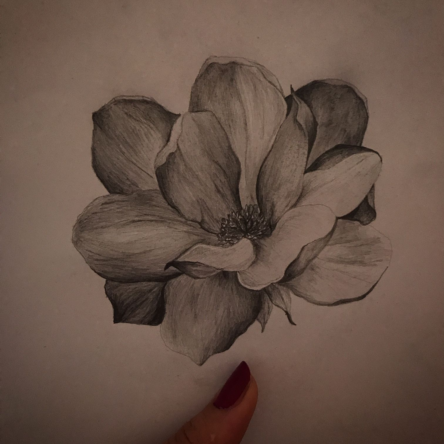 Magnolia. Drawing flowers in pencil is one of my favourite ...
