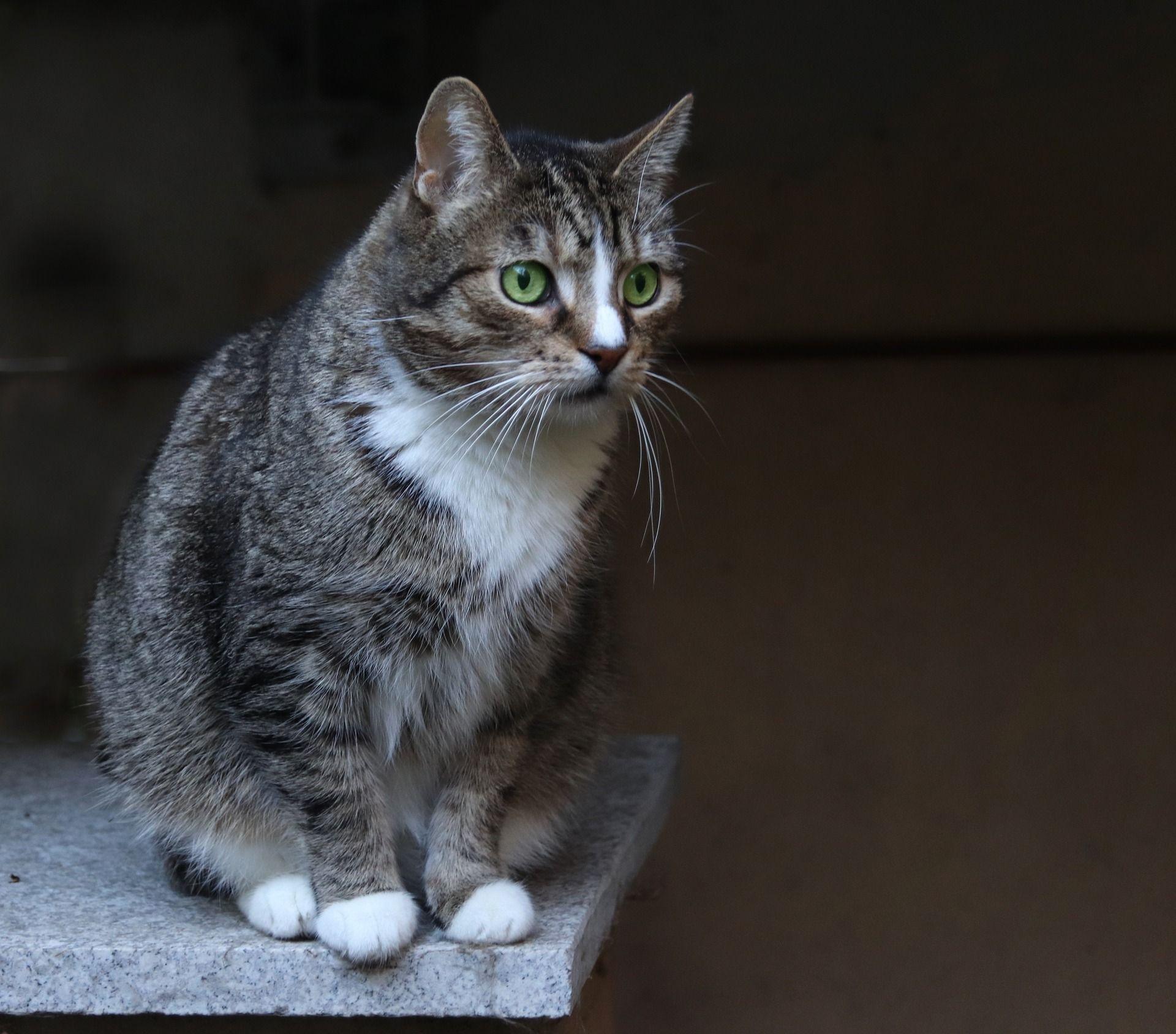 Katze Verschenken Allgemeine Informationen Zum Thema Katzen