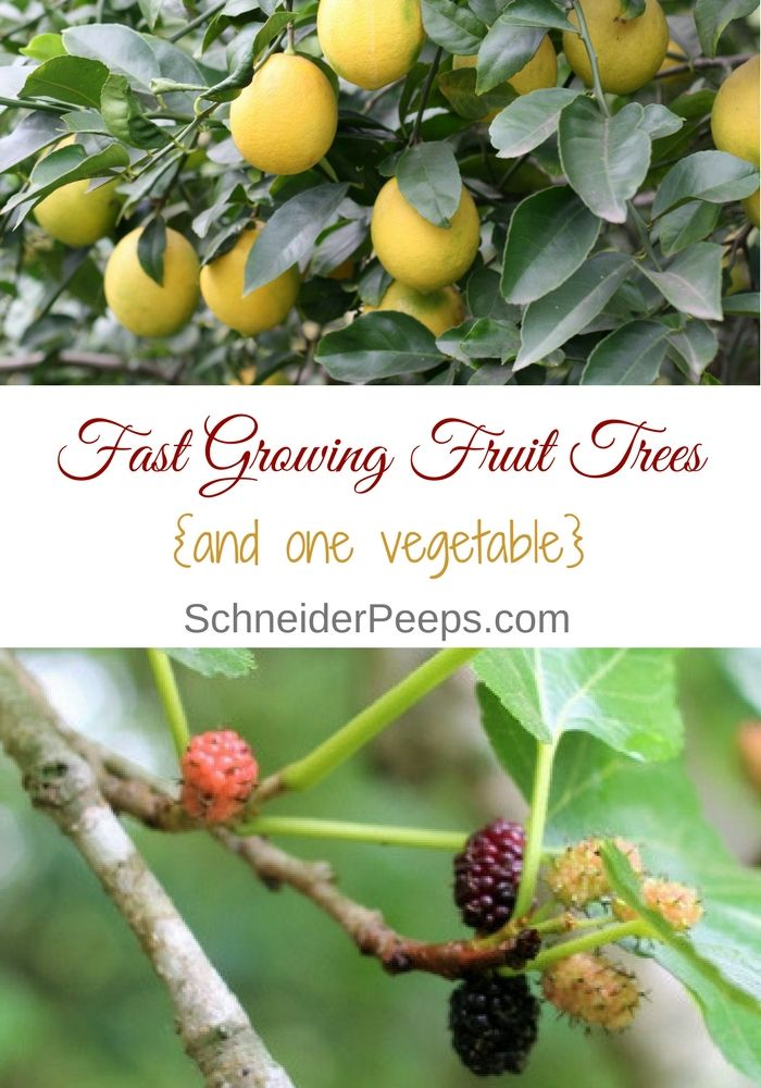 Six Fast Growing Fruit Trees And One Vegetable Schneiderpeeps Growing Fruit Trees Fast Growing Fruit Trees Growing Fruit