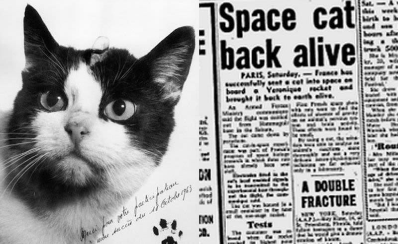 Felicette French Cat In Space Space Cat The Secret History