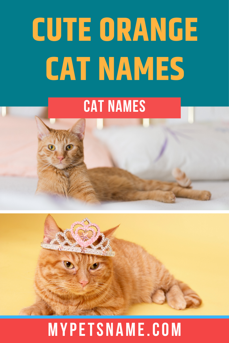 Cats The Color Of Bright Sunshine Can Be Incredibly Warm Cheerful And Loving Who Wouldn T Want To Wake Up To Cuddles From In 2020 Cute Pet Names Cat Names Orange Cat