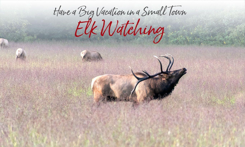 Where to view Elk in the Great Smokies Cherokee NC