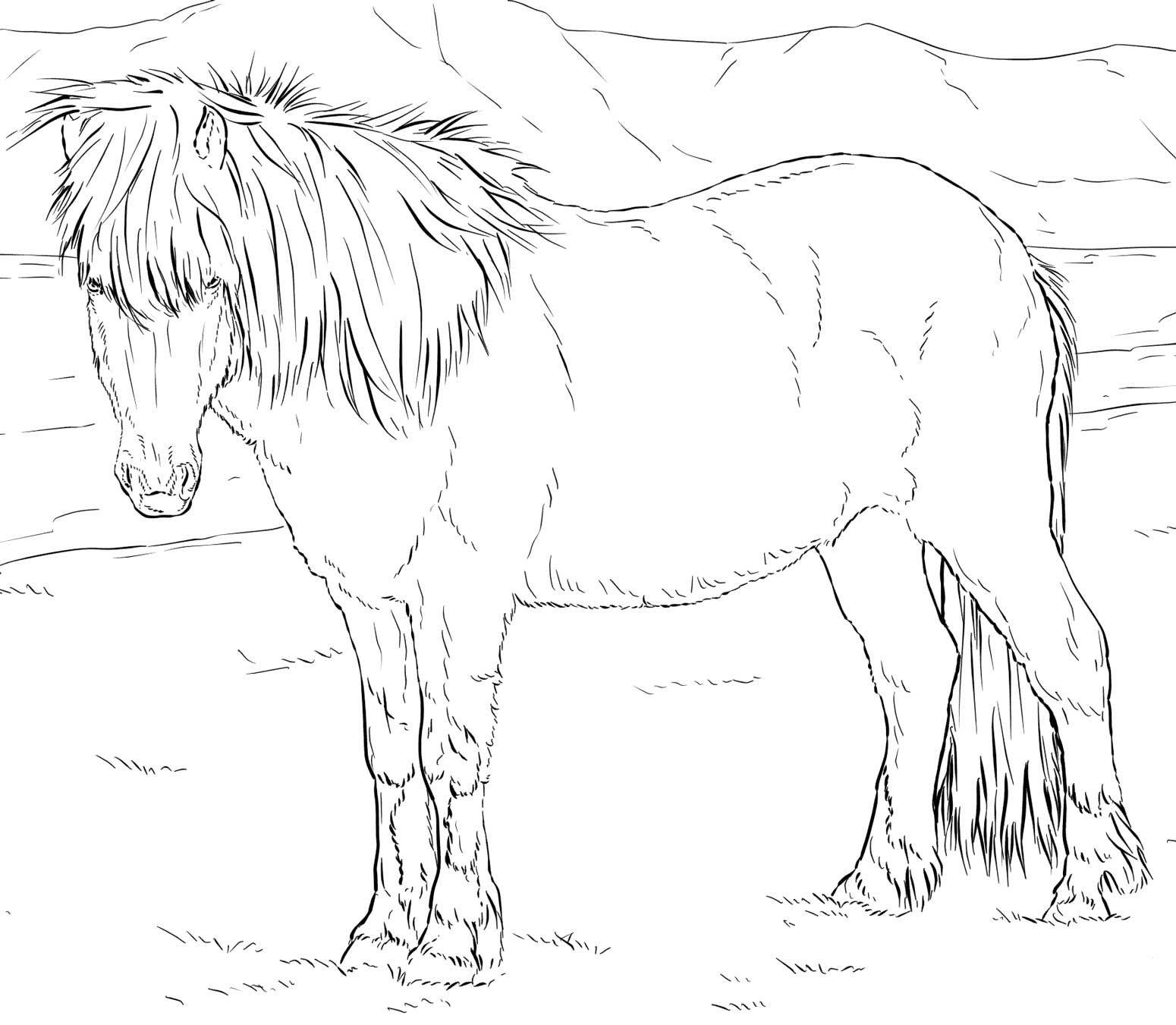 Icelandic Horse Coloring Page Hest Tegninger Islandsk Hest Horse [ 1351 x 1550 Pixel ]