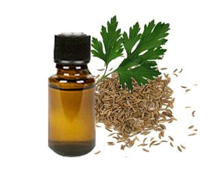 Parsley Seed Essential Oil, Parsley Seed Oil benefits & uses, Parsley Seed Oil manufacturers, bulk exporters India, pure Indian Parsley Seed Oil, wholesale Parsley Seed Oil, Parsley Seed Oil sellers, natural Parsley Seed Oil http://www.indiannaturaloils.com/product-parsley-seed-oil.html