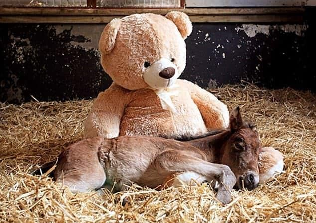 This donkey is still very small so it needs the help of a giant bear friend to drift off to dreamland.