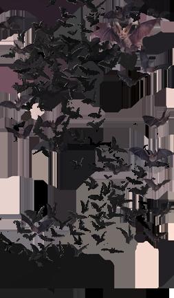 Forgetmenot Animals Bats Bat Art Vampire Art Superhero Art