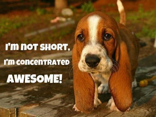 I am short and concentrated