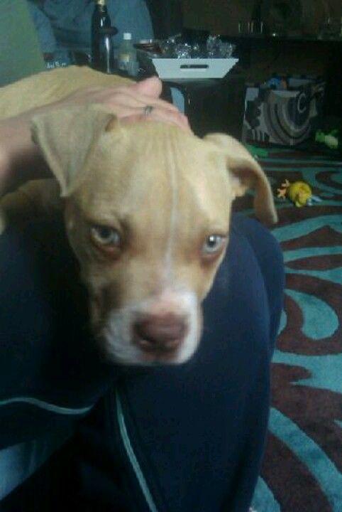 Blond Blue Eyed Angel Puppy Love Puppies Blue Eyes
