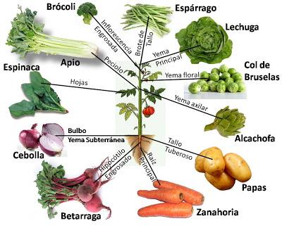 Tipos De Hortalizas Y Verduras Sabes Cómo Se Clasifican Tipos De Vegetales De Hortalizas