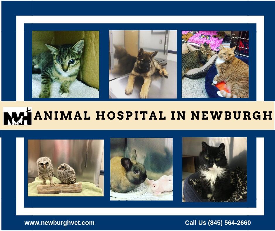 Newburgh Veterinary Hospital Offers A Variety Of Veterinary Services For Your Pets Our Staff Seeks To Pr Animal Hospital Pet Vet Veterinary Hospital