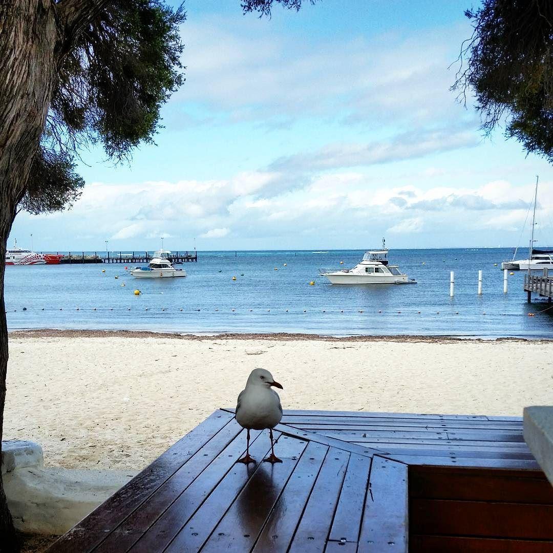 Rottnest island  reflections  #australia #rottnestisland #seagull #peaceful #blue by kraus_marie http://ift.tt/1L5GqLp