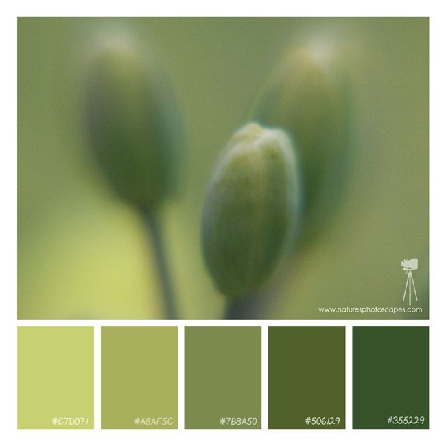 3 flower buds. #buds, #flowers, #green, #color scheme, #color palette, #photography
