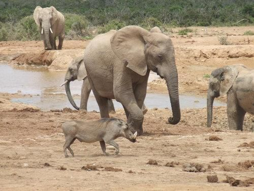 @Addo www.facebook.com/... #animals