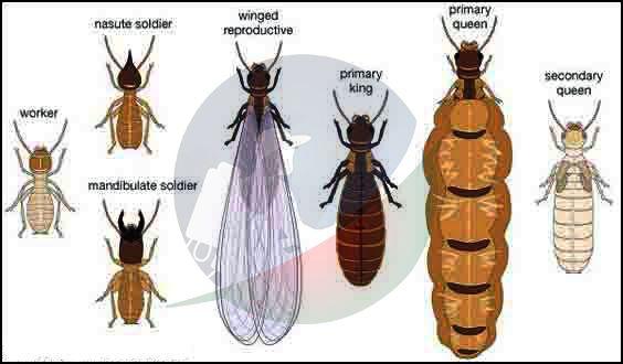 Termite Control In Bd Pest Control Bd Pest Control In Bangladesh