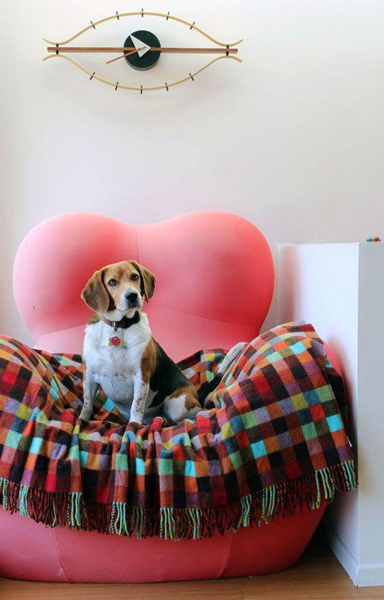 Regina Hardy S Jack Jill Heyday Home In 2020 Dog Milk Dog Bed Modern Beagle