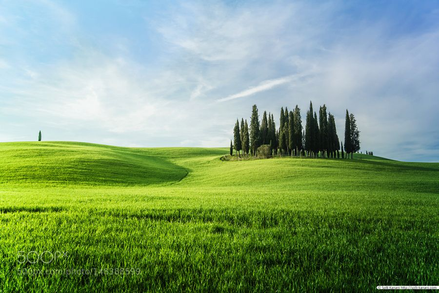 Green hills and cypress trees in Tuscany by SolliKanani