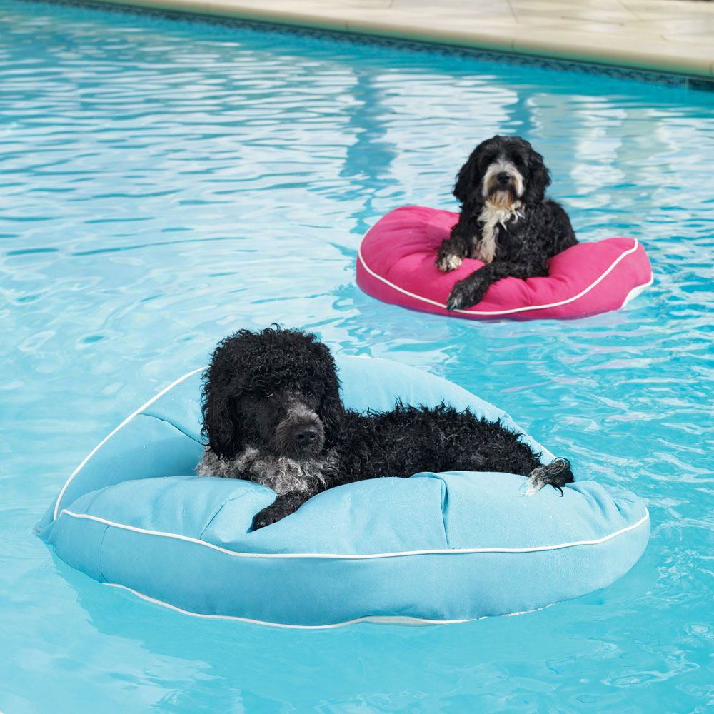 What We Re Obsessed With Frontgate S Pool Floats For Pets Dog