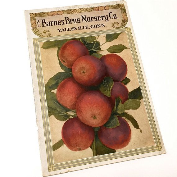 Apples vintage catalog cover illustration . paper ephemera ...