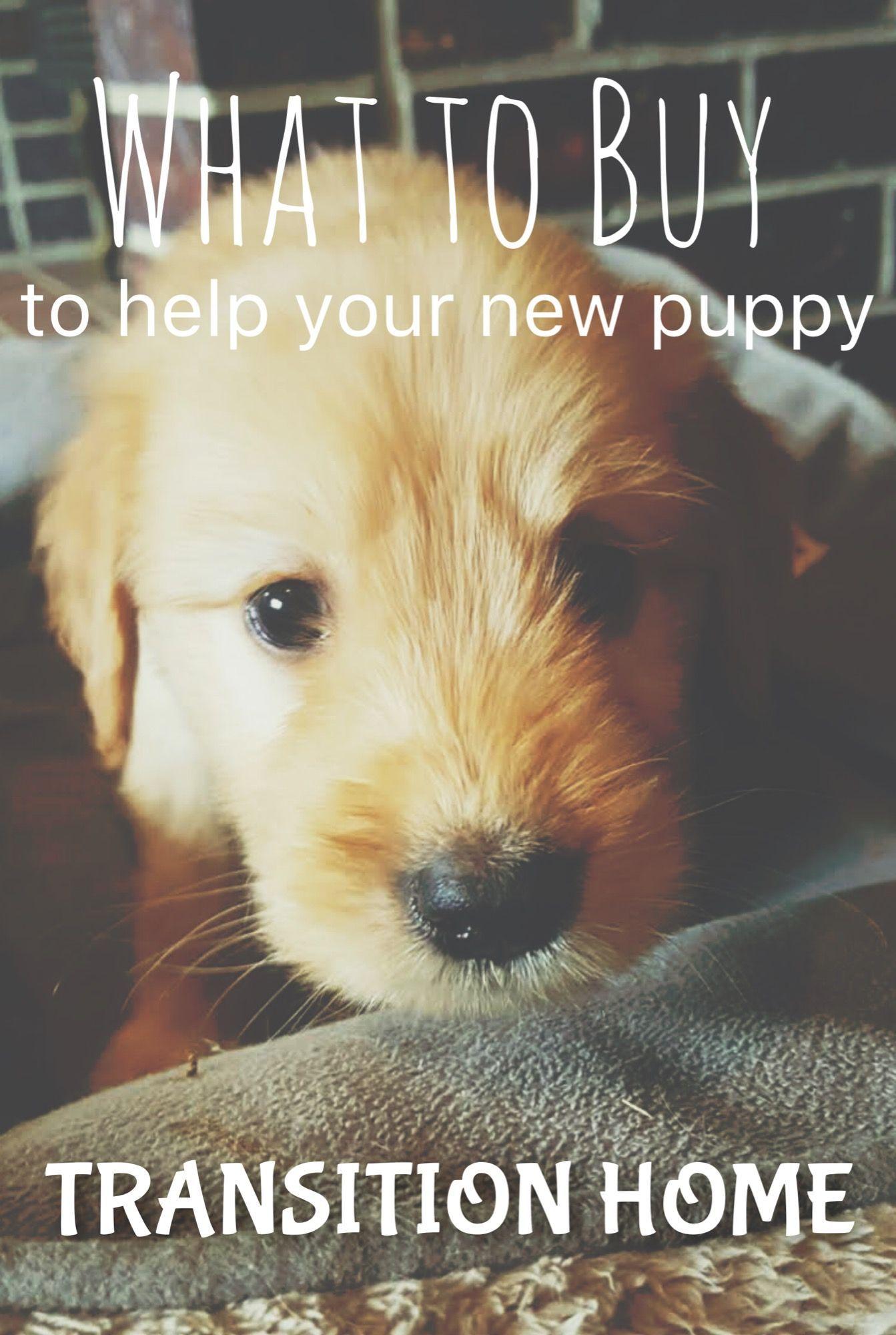 Pastor Aleman Husky Mix Cachorros En Venta Colorado Deutscher Schaferhund Husky Mix Welpen Zum Verkauf Colorado With Images Puppy Training New Puppy Training Your Puppy