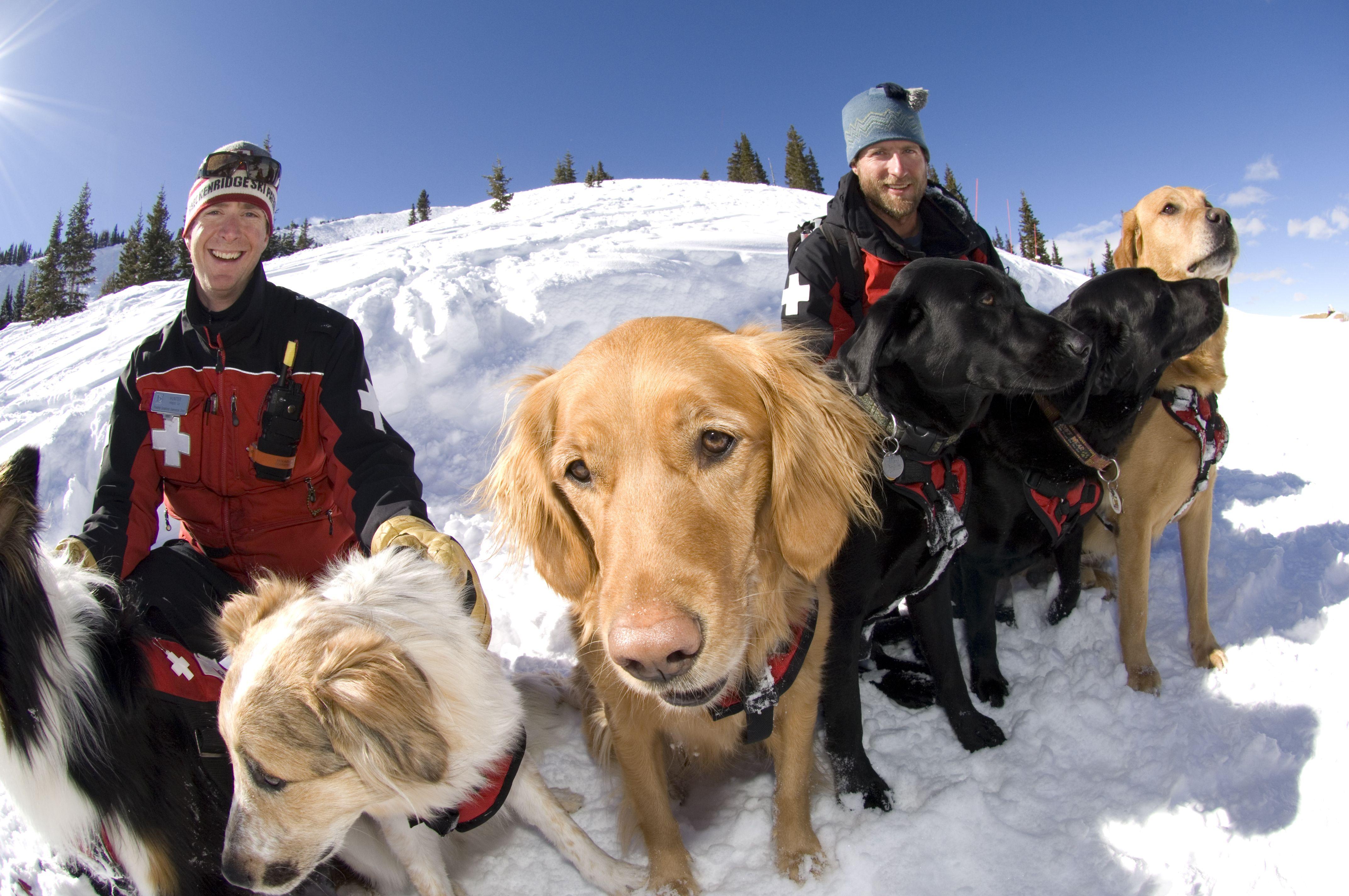 Ski Patrol Dogs Enjoy The Sunshine At Breckenridge Ski Resort