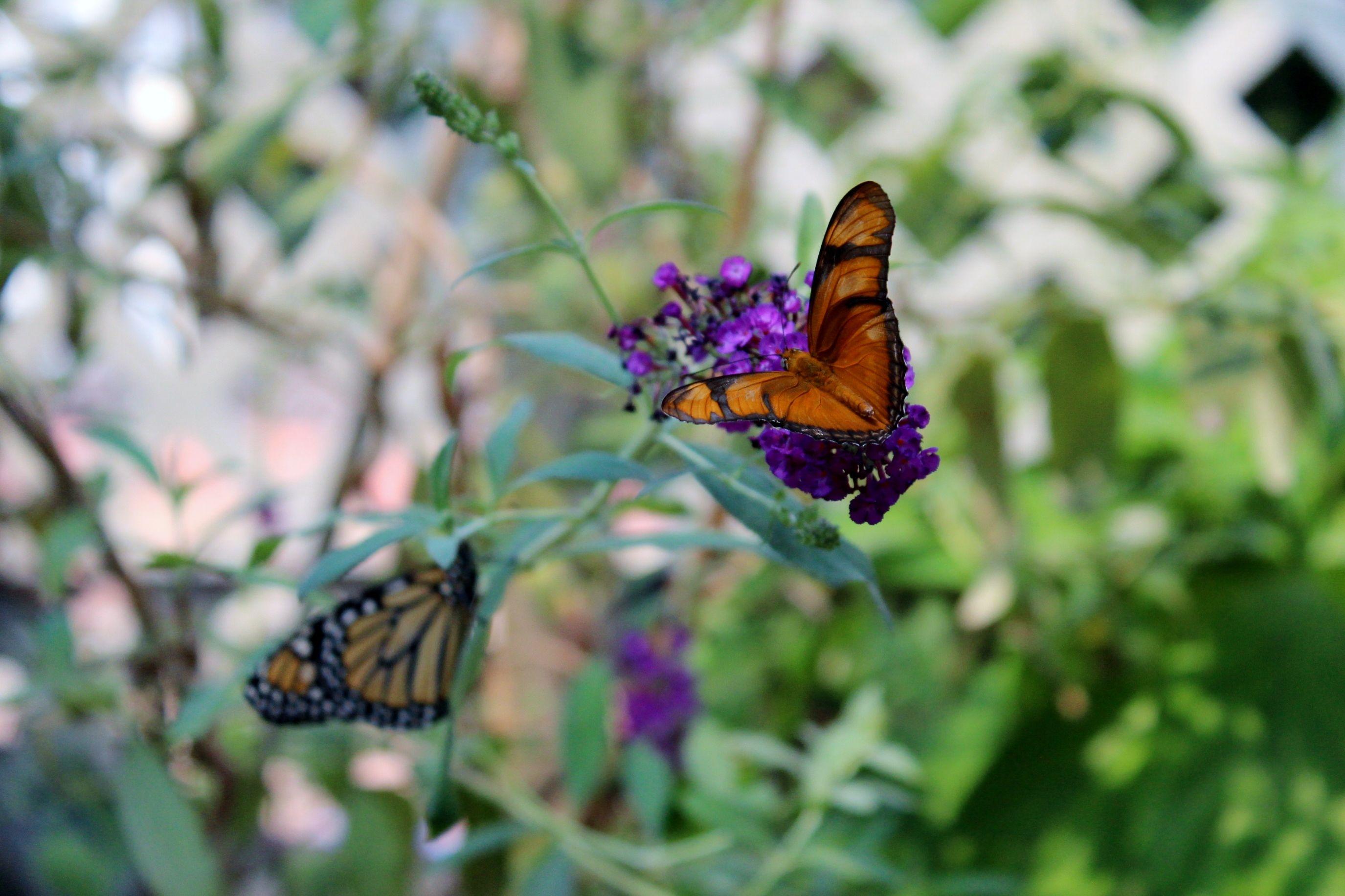 Butterfly house in Navarre