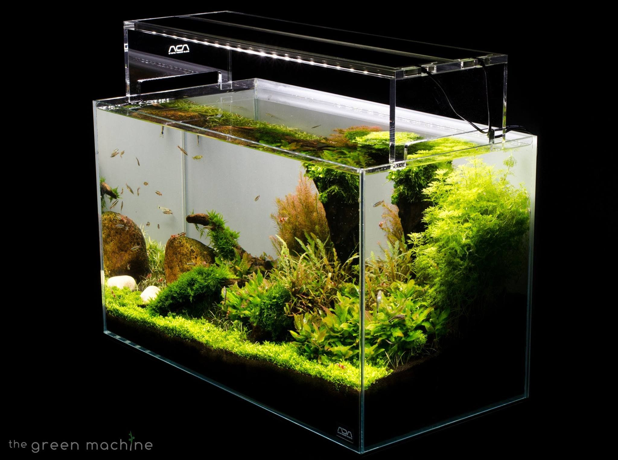 Aquascape Tutorial Guide By James Findley The Green