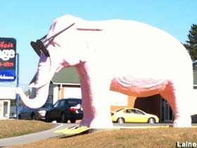 Pink elephant cookeville tn been there concepts pinterest visit reports news maps directions and info on pink elephant in cookeville tennessee publicscrutiny Gallery