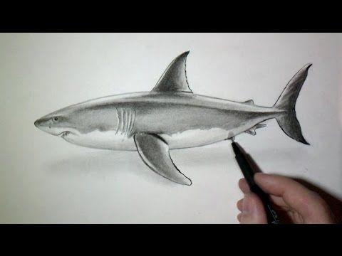 Comment Dessiner Un Requin Tutoriel Video Requin