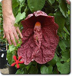 Pin On Plants At Ravenscourt Gardens Houston Heights