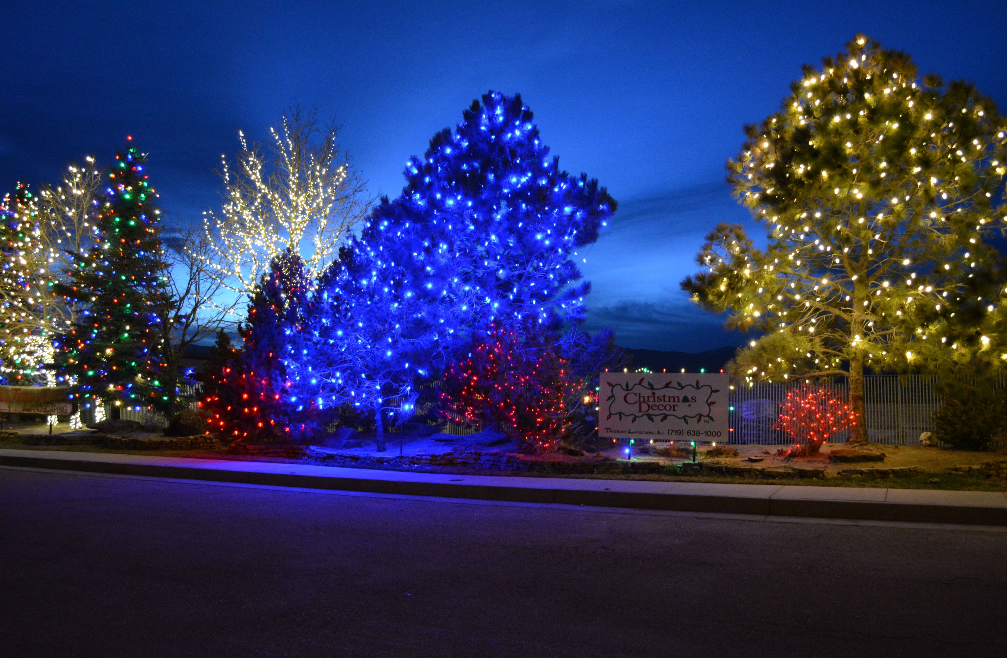 Colorful Led Lit Trees  Christmas Lights By Timberline Landscaping