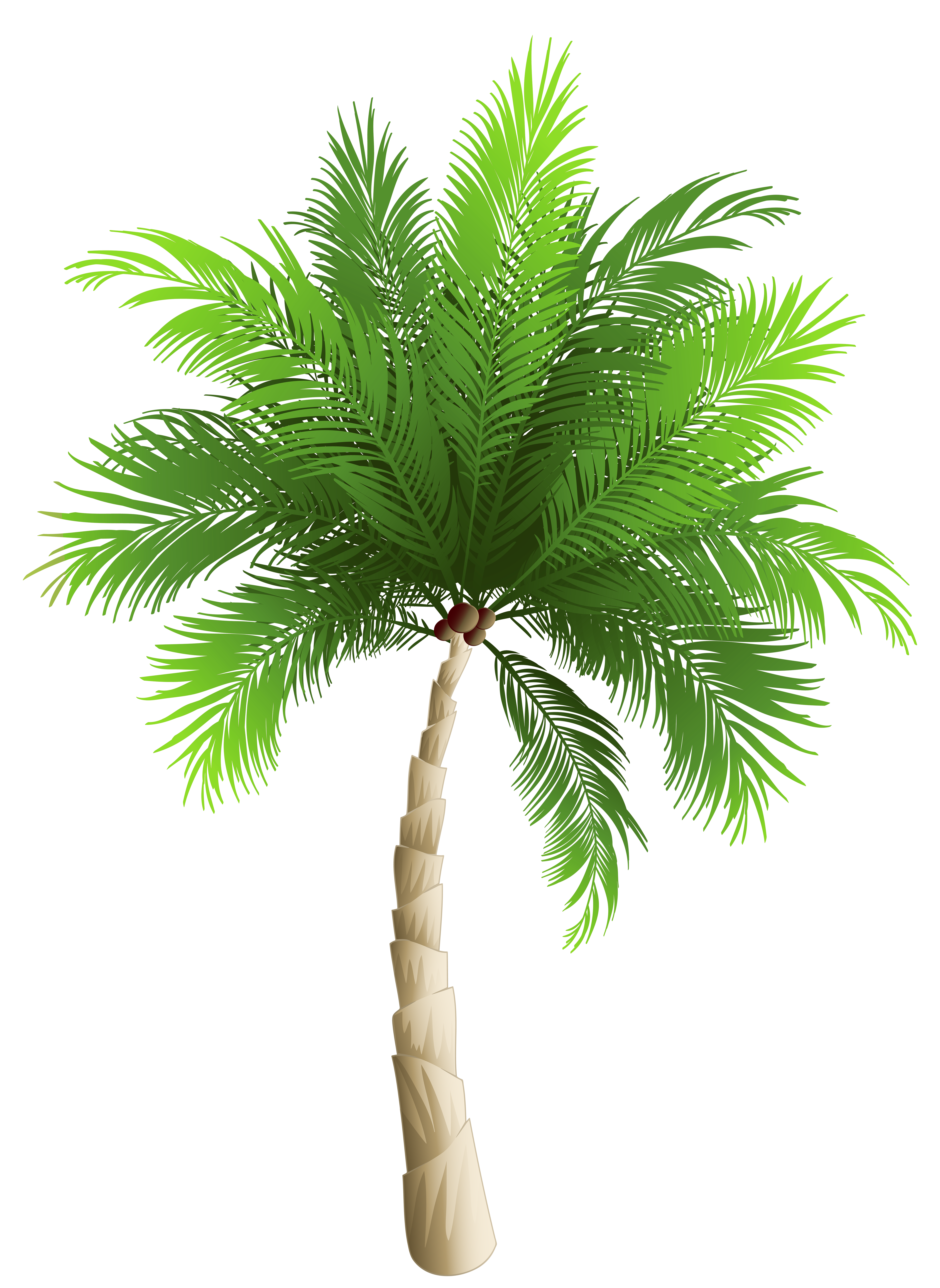 Pin By Sandro Rocha On Sandro Palm Tree Png Palm Trees