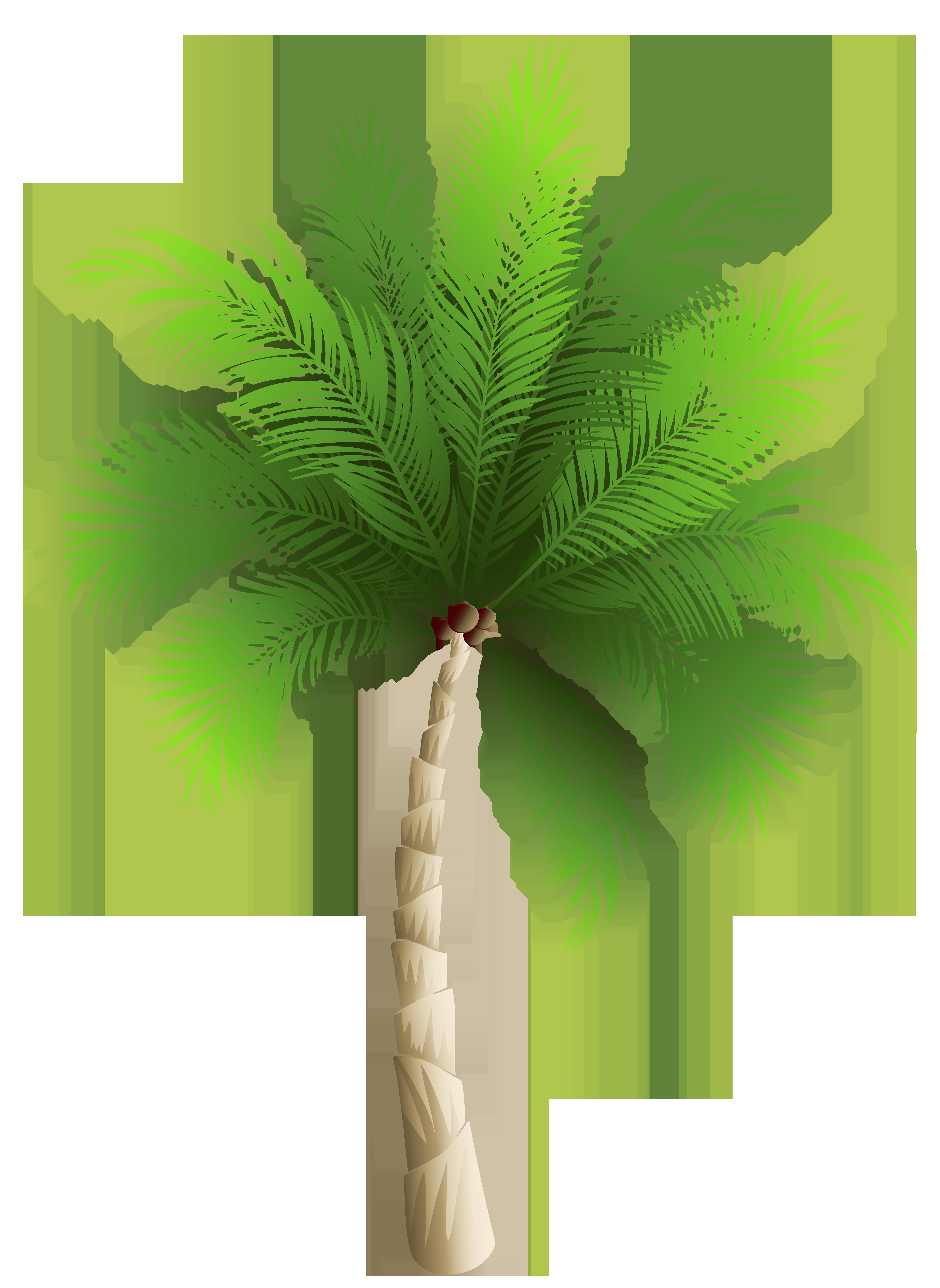 Palm Tree Png Clipart Image Ilustracao Botanica Flores Aquarela