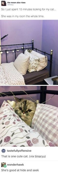 Cute hide and seek catto funny pics, funny gifs, funny videos, funny memes, funny jokes. LOL Pics app is for iOS, Android, iPhone, iPod, iPad, Tablet