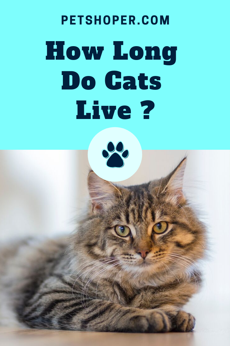 Average Lifespan Of An Outdoor Cat Cat Lifespan Petshoper Outdoor Cats Cat Lifespan Cat Years