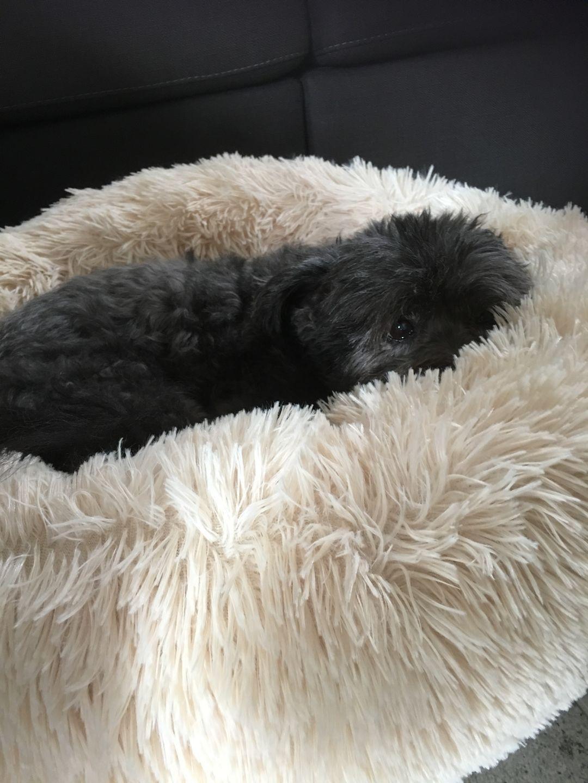 The Pet Calming Bed goeggy Pet calming, Faux fur dog