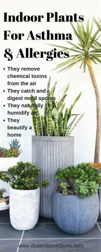 best indoor plants for asthma allergies and air pollutions garden