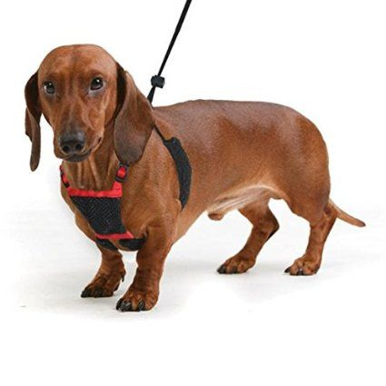 Do Harnesses Stop Dogs Pulling