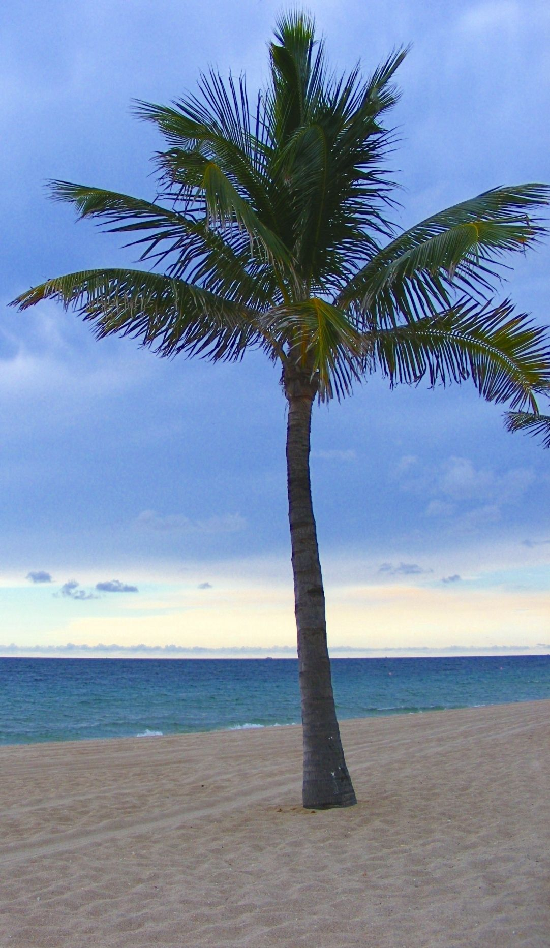 Palm Tree Image, On Beach In