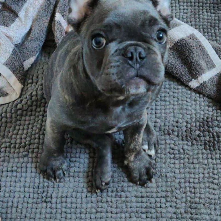 What Ya Doing It S Saturday Let S Go Play Frenchies