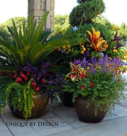 Https Www Google Co Uk Search Q Summer Pots Container Flowers Plants Container Gardening