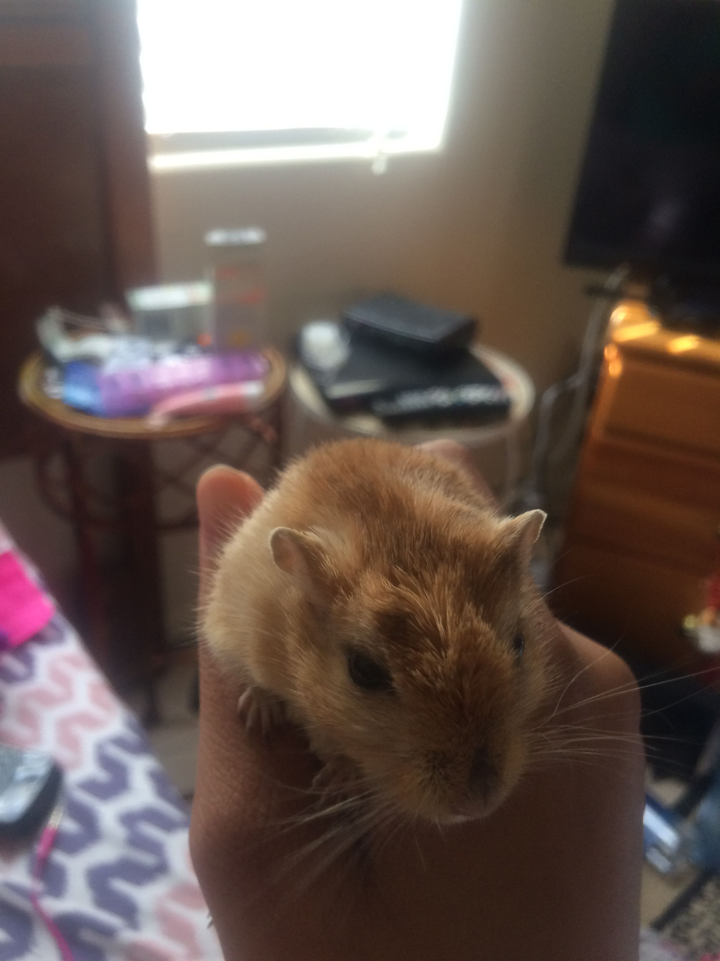 This is my gerbil his name is Judo.