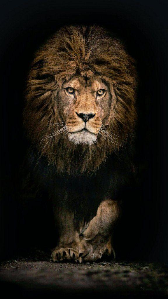 Je Myall3000 Lion Images Lion Wallpaper Lions Photos