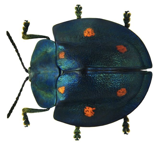 One Hobbyists Stunning Collection of Beetles From Around the