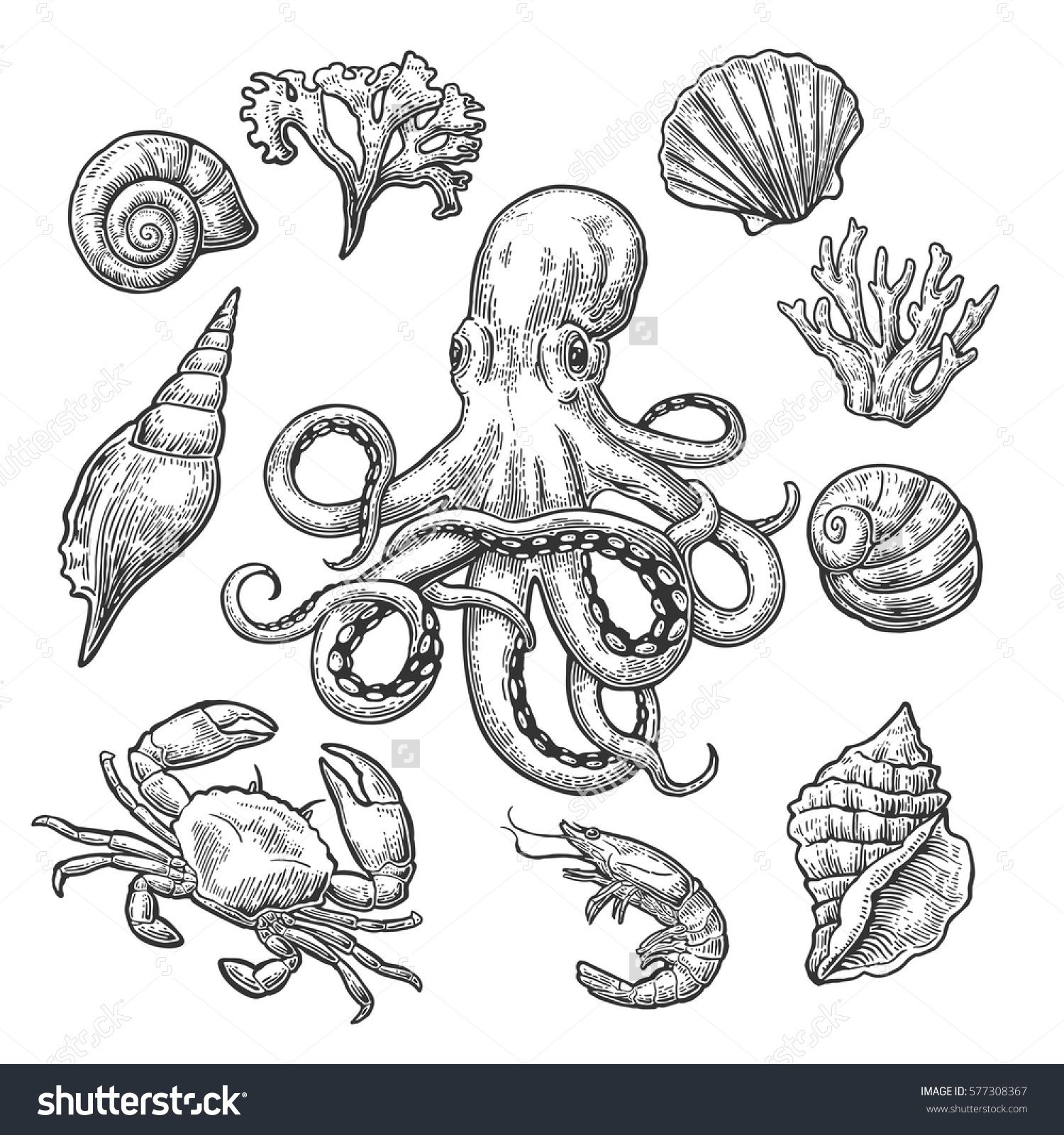 Set sea shell, coral, crab, shrimp and octopus. Vector black engraving vintage illustrations. Isolated on white background.